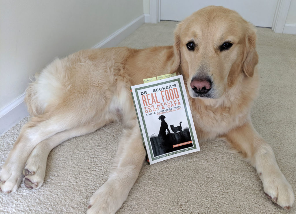 Meeko the Golden Retriever posing with raw food book - Dr. Becker's Real Food for Healthy Dogs & Cats: Simple Homemade Food.