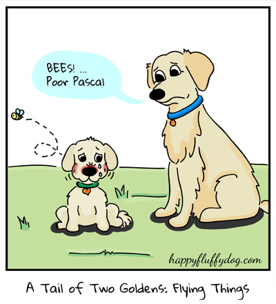 A Tail of Two Goldens: Flying Things (3/3)